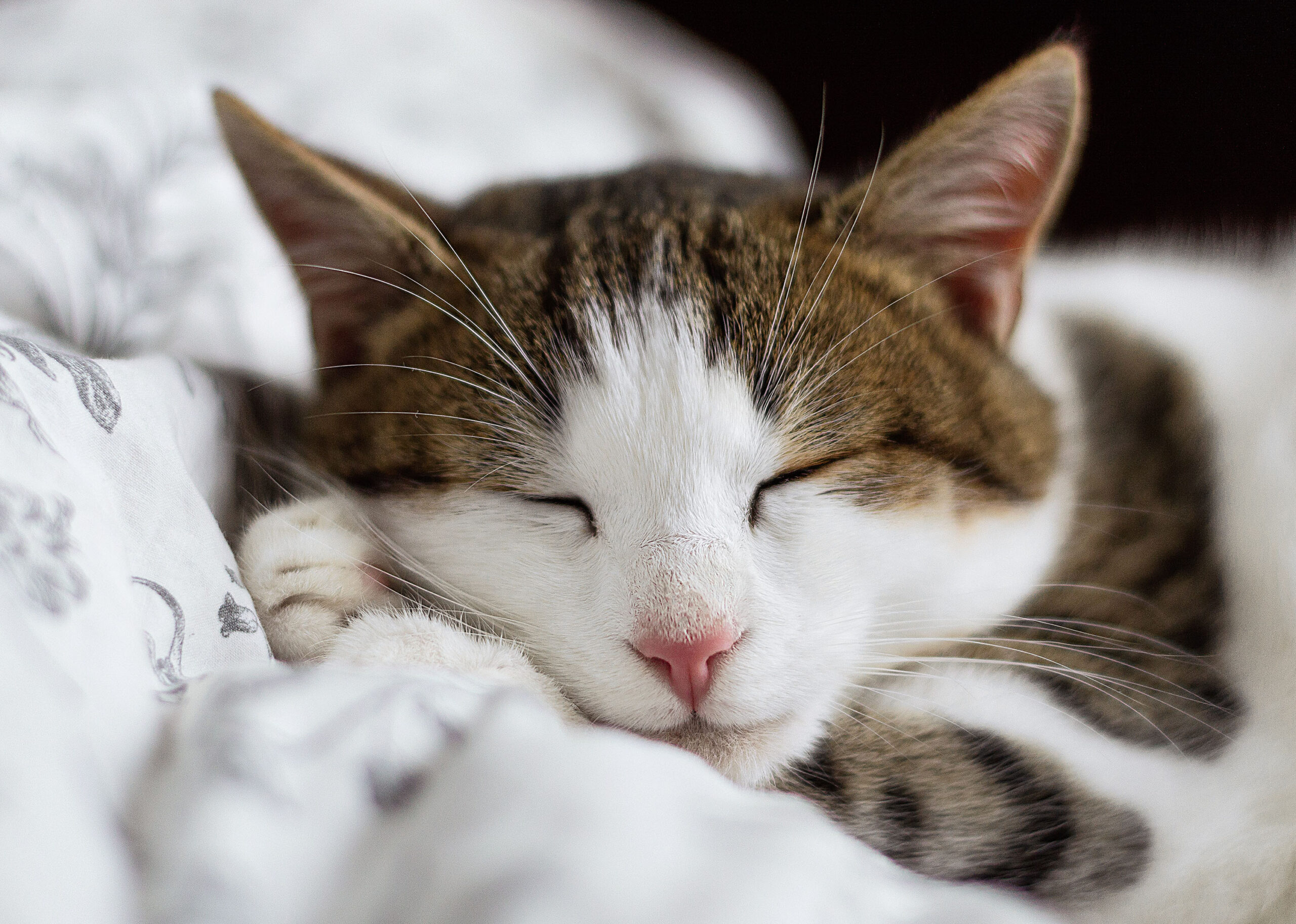 Picture of Sleeping Cat on Bed